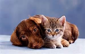 catdog22