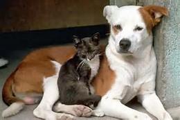 catdog21